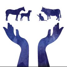 Céline Bliekast – Ostéopathe pour animaux